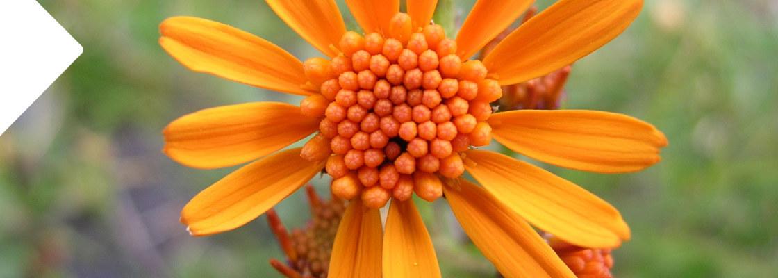flora_parcno_nazionale_stelvio